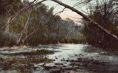 Vintage postcard front. Along A Mountain Stream in The Land of The Sky - North Carolina