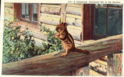 Linen Postcard Front - A Chipmunk - Universal Pet in The Rockies