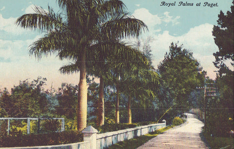 Royal Palms at Paget - Cakcollectibles - 1