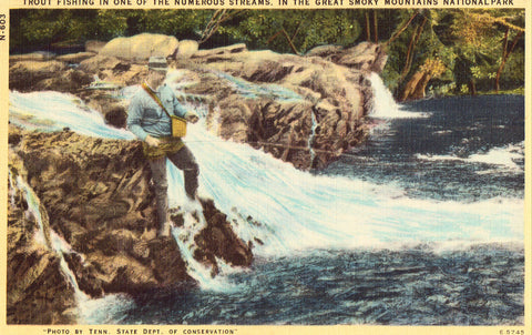 Linen postcard Trout Fishing in The Great Smoky Mountains National Park