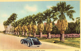 Linen postcard front Palm Lined Highway - Lower Rio Grande Valley of Texas