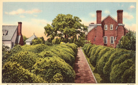 Linen postcard Boxwood at George Washington's Birthplace - Virginia