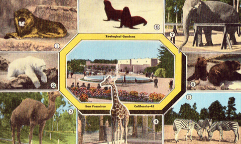 Multi View Postcard - Zoological Gardens - San Francisco,California
