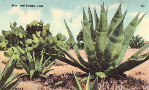 Linen Postcard - Sotol and Prickly Pear