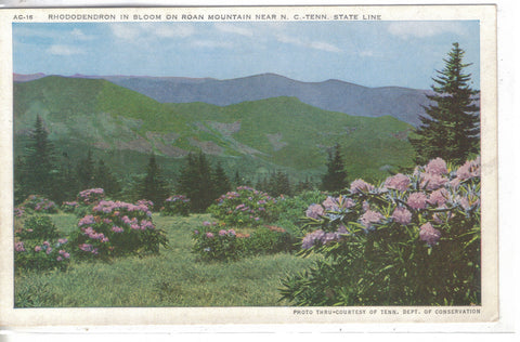 Rhododendron In Bloom On Roan Mountain -N.C/ Tennessee - Cakcollectibles