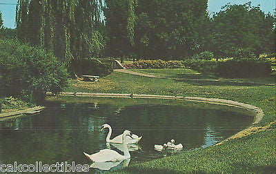 Trumpeter Swans,Memorial Park-Sioux City,Iowa 1978 - Cakcollectibles