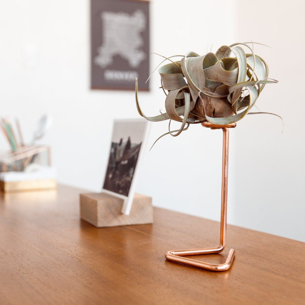 Air Plant Stand Diy Furniture Store
