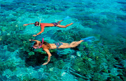 Snorkeling in a Reef Experience