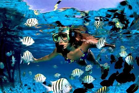 best rated snorkeling and scuba diving in playa del carmen