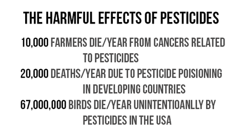 The Harmful Effects of Pesticides