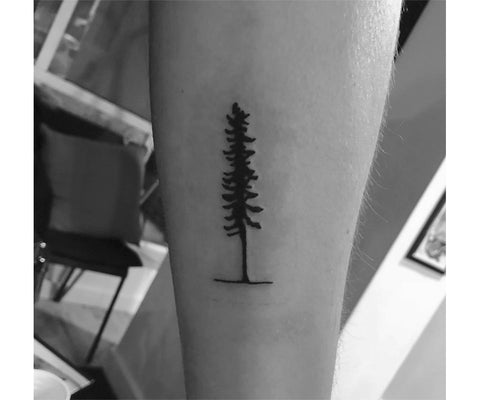 Sitka Tree | Tattoo | Canada | Investor Update