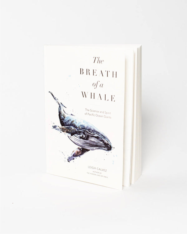 The Breath of a Whale - All - Hero