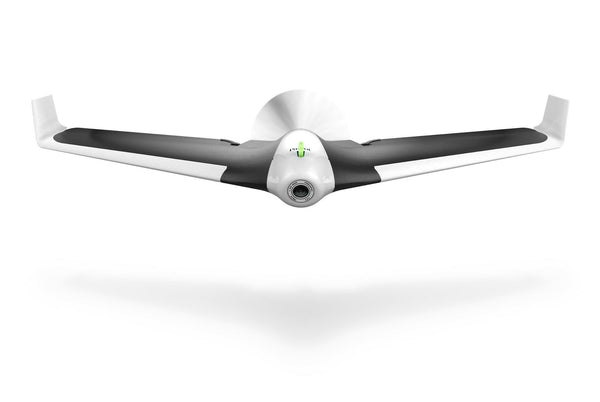 Parrot Disco - D W-P Enterprises LTD - 13