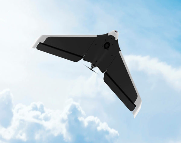 Parrot Disco - D W-P Enterprises LTD - 14