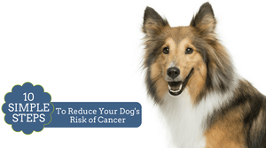 Lower Dog Cancer Risk | Organic Dog Shampoo | Natural Dog Shampoo