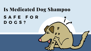 Is medicated dog shampoo safe for dogs? Safer alternatives that work