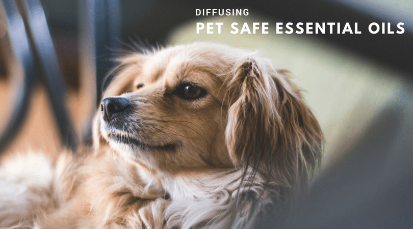 Diffusing Pet Safe Essential Oils In Your Home