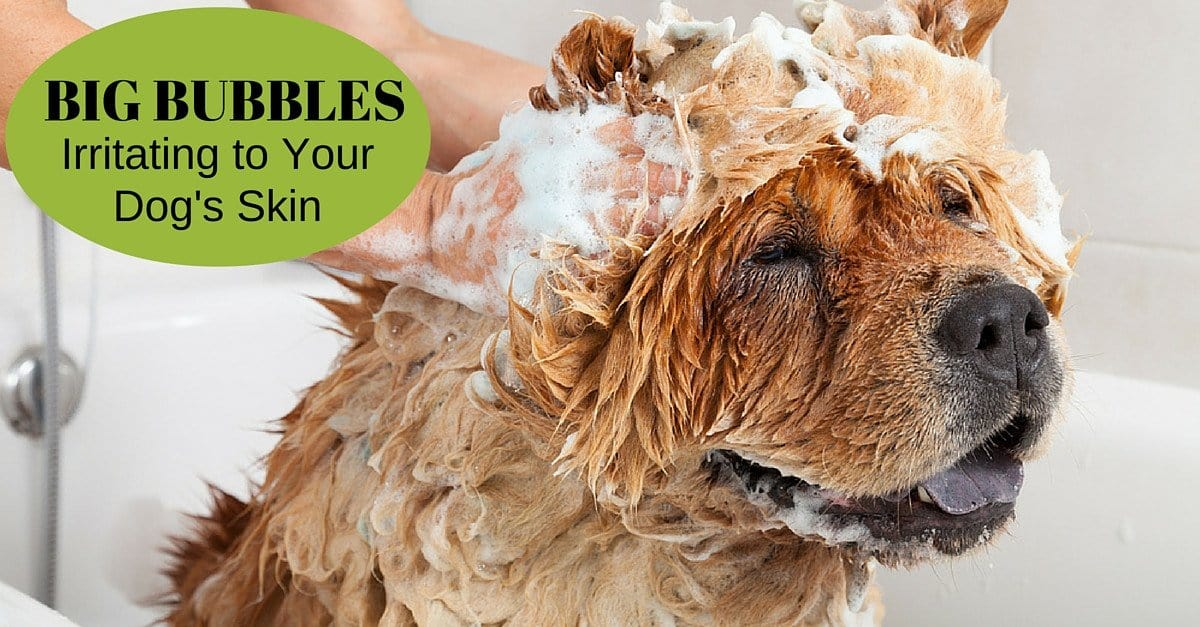 Lesson 3: Bubbles are Fun but may Irritate to Your Dog's Skin!