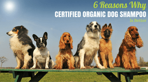 Want the Best Dog Shampoo? You Want Certified Organic Dog Shampoo