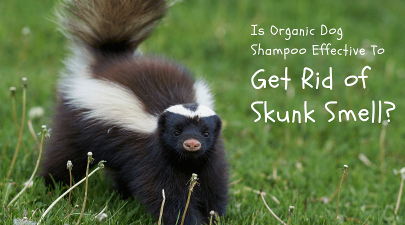 Use 4-Legger's Organic Dog Shampoo to Get Rid of Skunk Smell