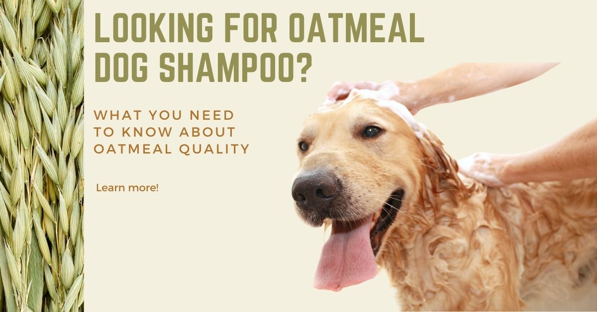 oatmeal dog shampoo | oatmeal and aloe dog shampoo