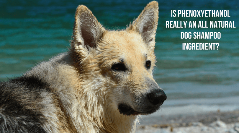 Is Phenoxyethanol Really an All Natural Dog Shampoo Ingredient?