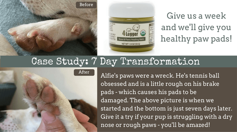 Paw Balm | Snout Soother | Paw Wax | Snout Smoother | Healing Balm for Dog