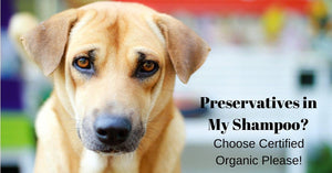 Lesson 2: Preservatives in Pet Shampoo