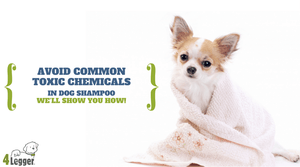 Chemical Free Dog Shampoo | Safe Dog Shampoo | Best Dog Shampoo