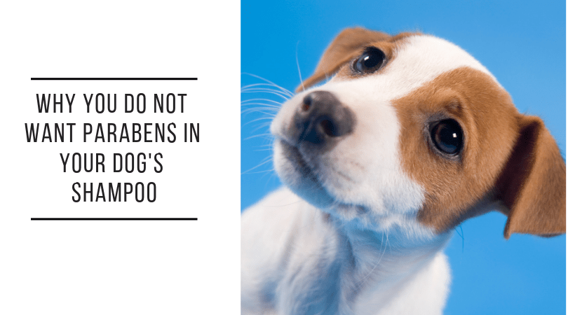 Why You Must Avoid Parabens In Dog Shampoo