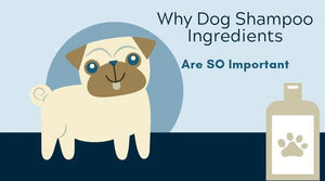 learn why dog shampoo ingredients are so important