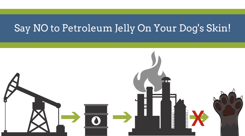 Why You Shouldn't Use Petroleum Jelly on Your Dog - 4-Legger