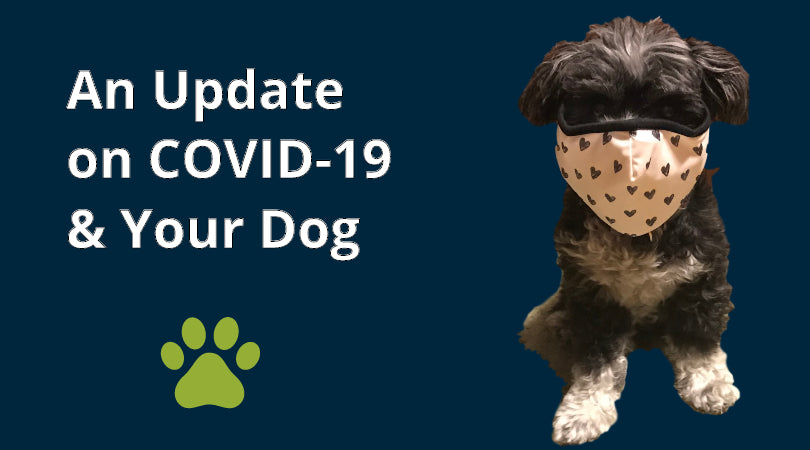 Can my dog get COVID-19? We've got the answers