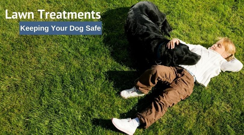 Lawn Treatments and Your Dog - Keeping It Safe