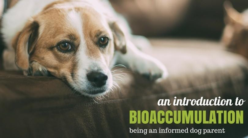 An Introduction to Bioaccumulation: Living As An Informed Pet Parent