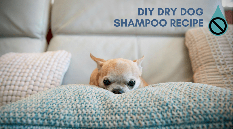 DIY Dry Dog Shampoo Recipe: An Easy Homemade Dog Shampoo Recipe You Can Make