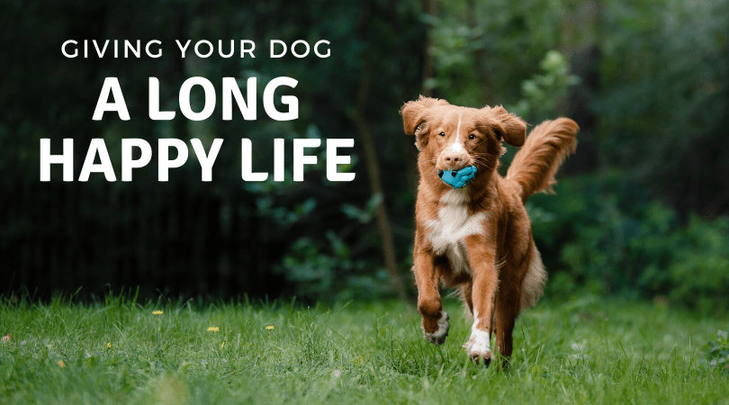 Give your dog a long happy healthy life with 4-Legger organic dog shampoo