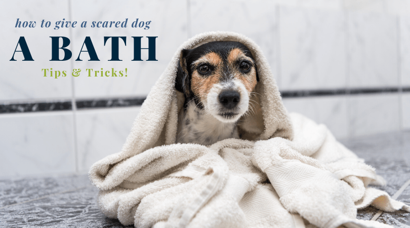 Tips on How To Give a Scared Dog a Bath