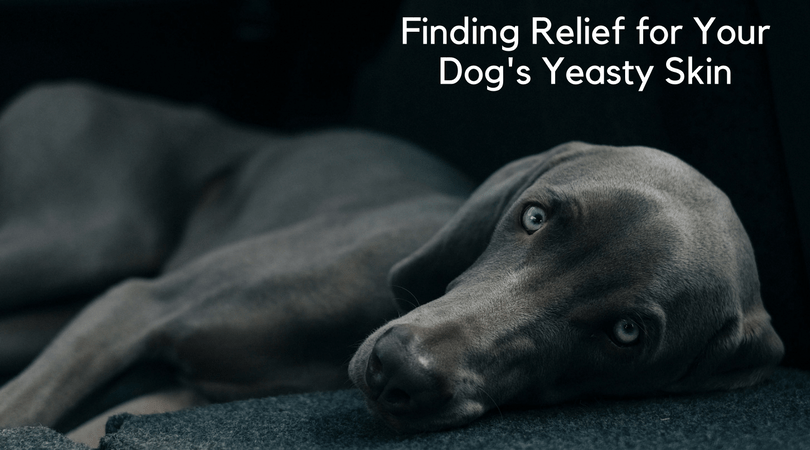 A Holistic Approach To Solving Your Dog S Yeast Infection 4 Legger