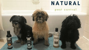 naturally kill fleas with our organic dog shampoo