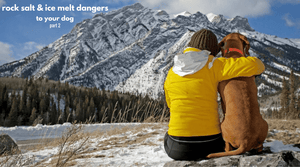 Rock Salt and Ice Melt Dangers To Your Dog