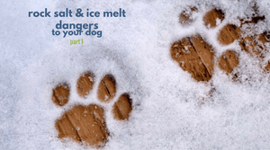 Is Rock Salt Safe for my Dog? | Is Ice Melt Safe for My Dog?