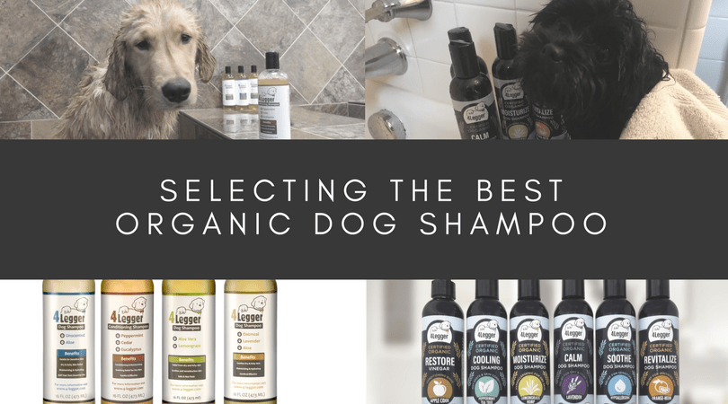 How can you select the best organic dog shampoo