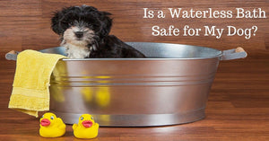 A Bath Without Water = A Dog Covered In Environmental Toxins