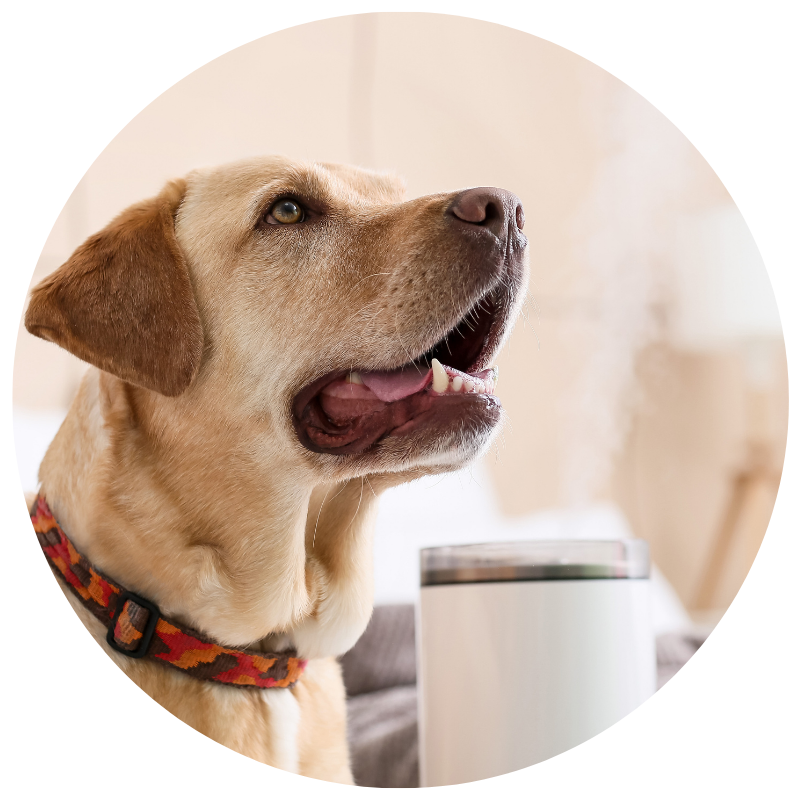 Pet Safe Essential Oil Blends by animalEO