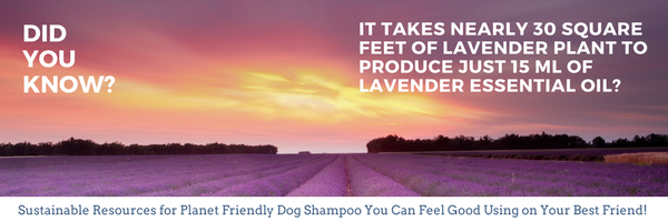 4-Legger Sustainable Ingredients in our Organic Dog Shampoo For A Healthy Planet