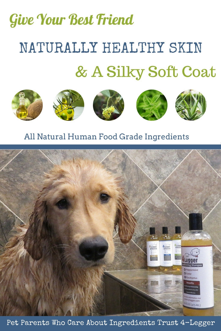 Best Organic Dog Shampoo  | Aloe Dog Shampoo | Certified Organic Dog Shampoo