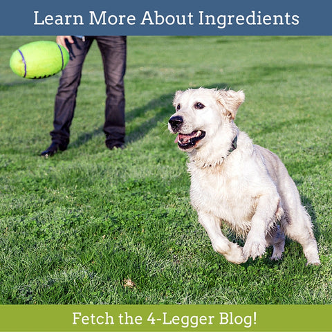 Learn More About Ingredients in the 4-Legger Blog