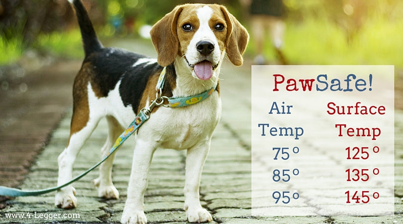 Air and Surface Temperatures - Keeping Your Dog's Paw Safe
