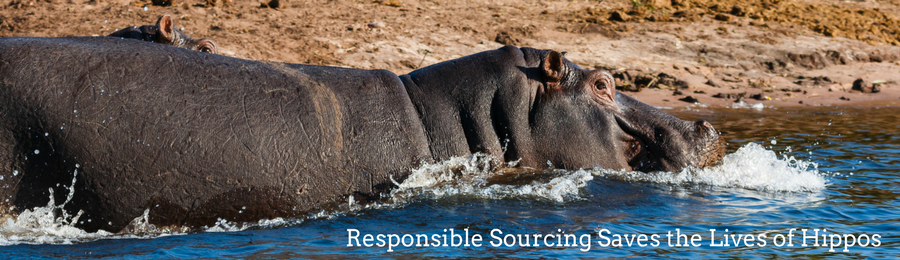 Socially responsible sourcing of shea butter saves the lives of hippos